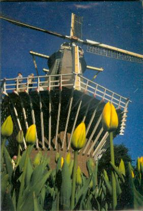Holland 5 3D Greeting Card
